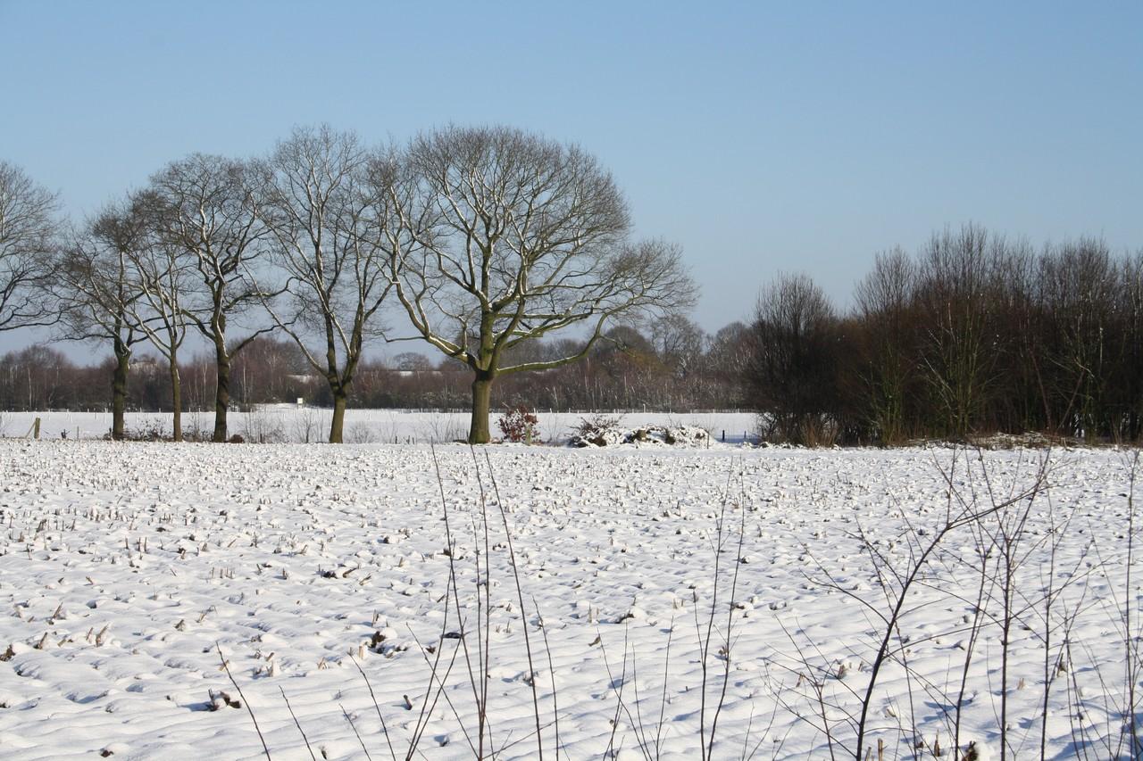 Natuurfoto's Winter